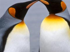 Travel photos…penguins